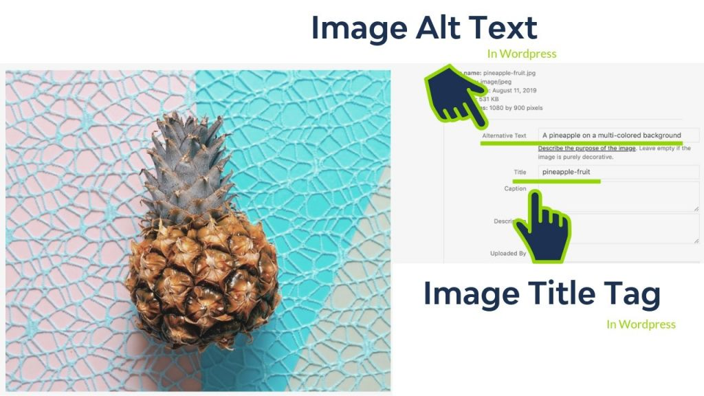 how to understand what image alt text and image title tags are